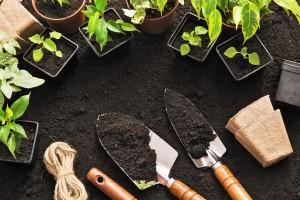 gardening mud